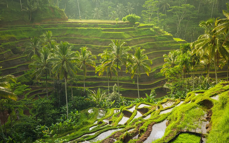 Image result for Tegallalang Rice Terraces Ubud
